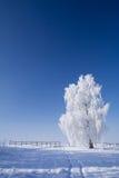 日冻结的中间晴朗的冬天 免版税库存图片