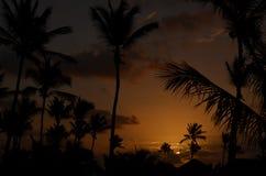 日出、棕榈树和屋顶 免版税库存照片