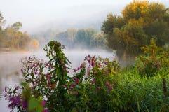 日出、薄雾、树和河 河Luznice,捷克共和国 库存图片