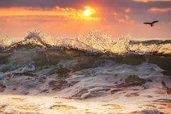 日出和发光的波浪 库存图片