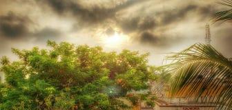 日出和树! 免版税库存照片