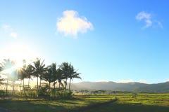 日出和椰子 免版税库存照片