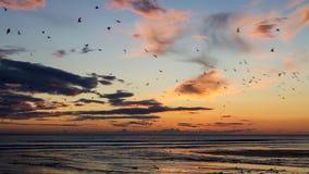 日出和海鸥群  图库摄影