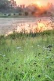 日出和狂放的植被由湖 库存图片