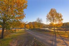日出和秋天树 图库摄影
