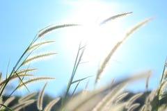 日出和草花在一个早晨 免版税库存图片