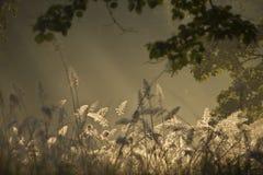 日出和野草, Bardia国家公园,尼泊尔 免版税库存图片