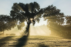 日出和雾 图库摄影