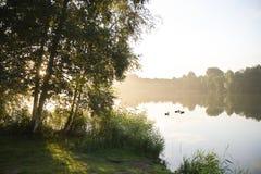 日出和birchtrees在湖 免版税库存图片