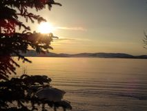 日出在一个冻湖的冬天有在foregrou的一棵云杉的 库存图片
