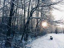 日出在一个安静的冬天森林里 免版税库存照片