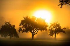 日出在一个有雾的早晨 免版税库存照片