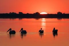 日出在三角洲Dunarii多瑙河三角洲和鹈鹕殖民地 免版税库存图片