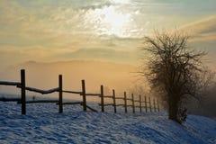 日出在与树、篱芭和雾的冬天 免版税图库摄影