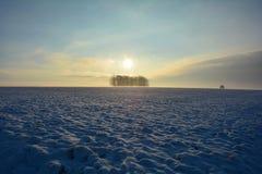 日出在与树和雾的冬天 库存照片