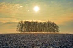 日出在与树和雾的冬天 免版税库存图片