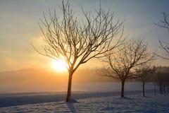 日出在与树的冬天 库存照片