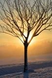 日出在与树的冬天 图库摄影