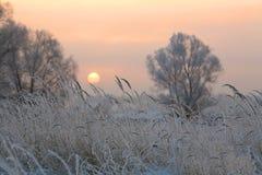 日出在冬天 免版税库存照片
