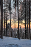 日出在北芬兰的森林里 免版税库存照片