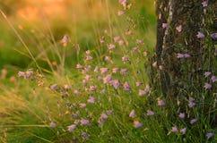 日出在夏天树丛里 库存图片
