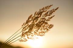 日出在太阳前面的植物剪影 库存图片