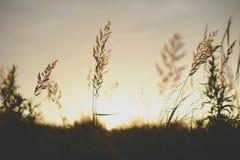 日出在太阳前面的植物剪影 免版税库存图片
