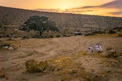 日出在有一棵孤立金合欢树的沙漠 库存图片