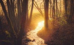 日出在森林春天 免版税库存图片