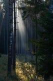 日出在森林里在Drawskie湖水地区(波兰) 免版税库存照片