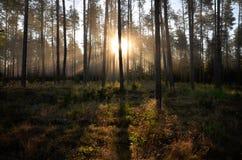 日出在森林里在Drawskie湖水地区(波兰) 库存照片