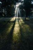 日出在森林里 免版税库存图片