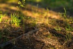 日出在森林里 免版税图库摄影