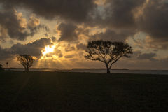 日出在沼泽地 库存图片