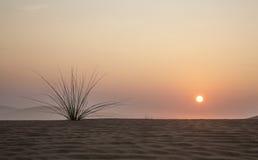 日出在迪拜附近的一片沙漠 库存图片