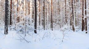 日出在雪冬天森林里 库存照片