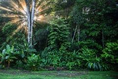 日出在Corcovado国家公园哥斯达黎加 免版税图库摄影
