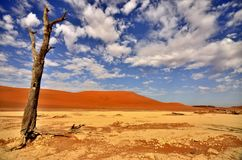 日出在DeadVlei -纳米比亚 免版税库存图片