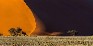 日出在Sossusvlei :一个著名红色沙丘40和在脚的金合欢树的全景它 库存图片