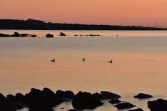 日出将跑撒丁岛 库存图片