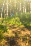 日出日落在森林里,足迹,自然,背景 库存图片