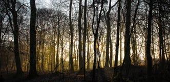日出日落在forrest冬天没有叶子冷的有雾的雾 免版税图库摄影
