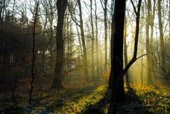 日出日落在forrest冬天没有叶子冷雾太阳 库存图片