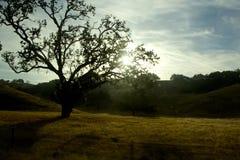 日出树 库存图片