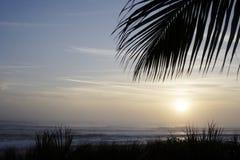 日出棕榈 免版税库存照片