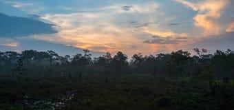 日出森林和薄雾 库存图片