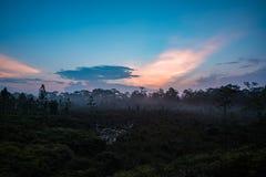 日出森林和薄雾 库存照片