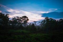 日出森林和薄雾 免版税库存照片