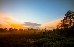 日出森林和薄雾 免版税库存图片