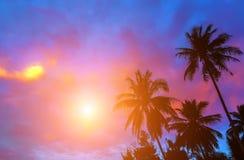 日出热带富饶 库存照片